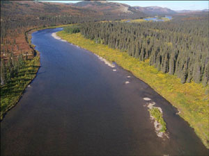 The Andreafsky River, seen from the air, stretches into the distance through conifer forest.