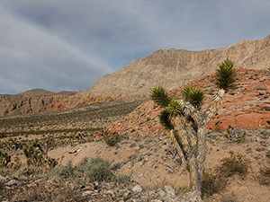 A Joshua Tree stands in front of orange hills.