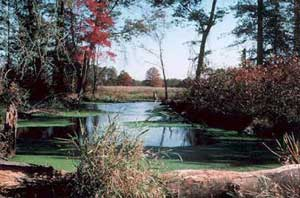 A small pond surrounded by open forest, looking out to an open field beyond.