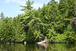 Tall, lush green trees surround a rippled lake.