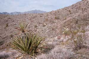 A dry desert scene of two green plants near the top of a ridge, surrounded with gray grass and brown dirt.
