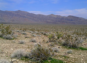 A blooming desert scene, with lots of brush and undergrowth.