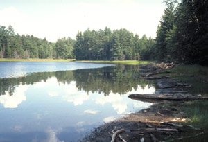 A lakeshore is hedged by green pine trees.  In the still waters a reflection of the shore can be seen.