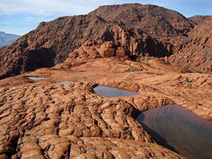 A large red rock surface covered in ripples holds small pools of water.