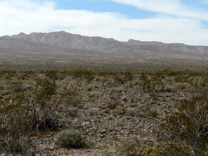 A dreary desert, where most of the colors are grey.  Some shrubbery exists among the stone covered terrain.