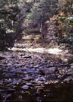 Photograph taken in  the East Fork Wilderness