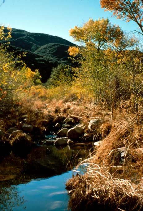 A small stream flowing through golden grass, looking up towards trees above, and forested hills in the distance.