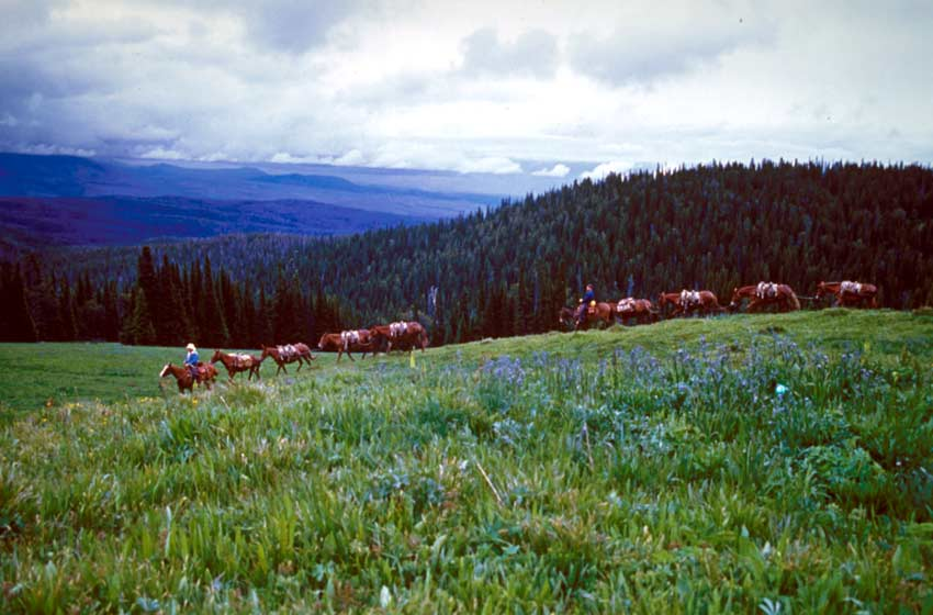 A large string of pack horses being led across a large meadow covered in blue flowers. Rolling forest hills stretch off into the distance under a stormy sky.