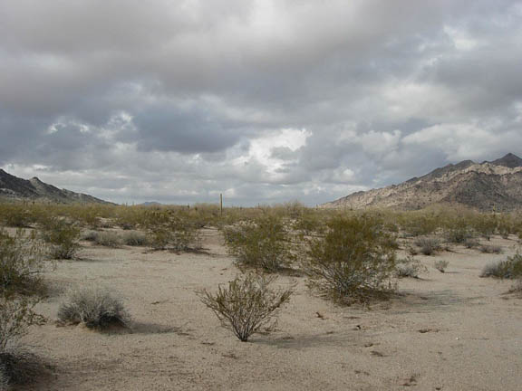 A view of the desert flatlands where shrubs sprout out of the ground on a cloudy day.