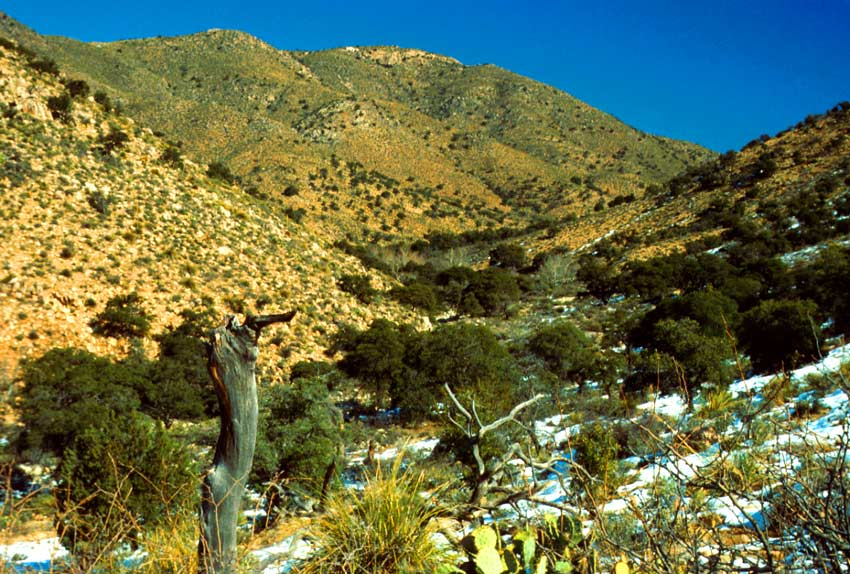 Looking up a desert valley under a deep blue sky. Desert foliage and cactus dot the landscape, surrounded by snow.