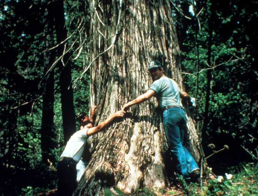 Several men standing at the base of a large tree holding hands, arms stretching around the massive trunk.