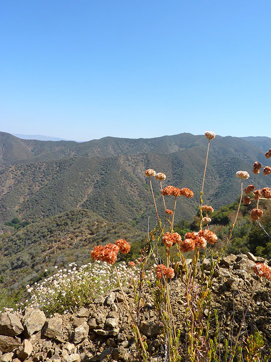 Round orange flowers appear in the foreground of rolling mountains.