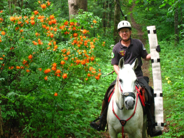 A man riding along a forest trail on a white horse, surrounded by orange blossoms on the dense forest undergrowth.