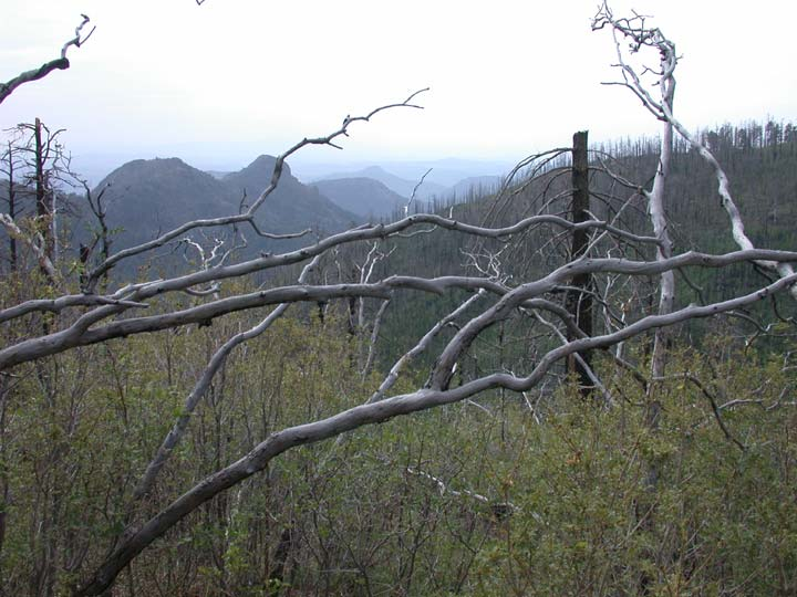 Looking through dead tree limbs, out over a brushy forest valley, rolling hills can barely be seen in the hazy distance.