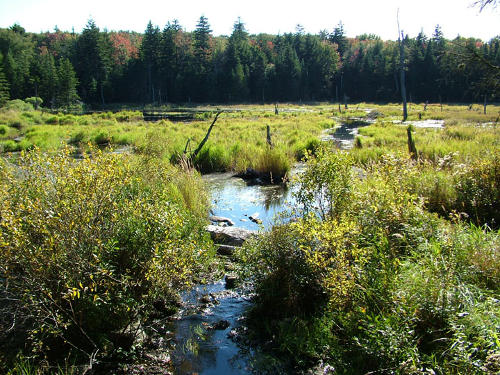 A small creek lazily flows out into an open marshy meadow, surrounded by forest.