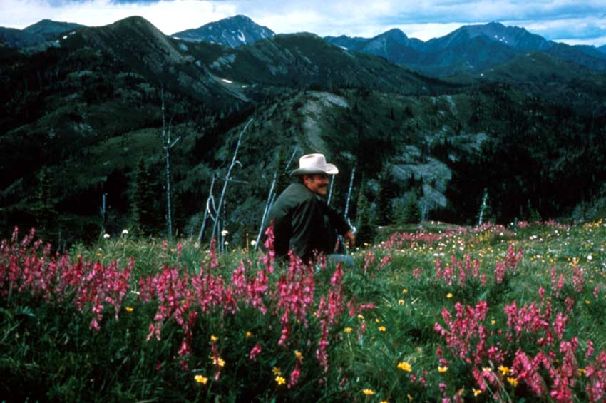 A man in a cowboy hat sitting in a patch of pink wildflowers, overlooking a large valley and several mountain peaks beyond.
