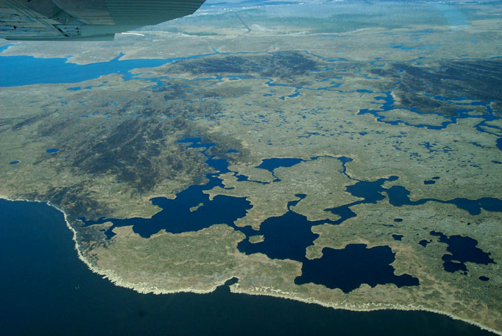 An aerial view of the coastal wetland region, with countless small confined bodies of water leading into the distance.