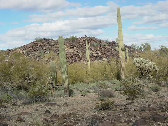 Saguaro cacti, desert shrubs, and trees surround the base of a litte hill littered with rocks.