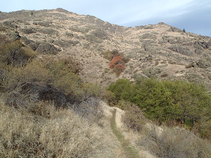 A trail leads up a hill covered in dry grass and dotted with rocks.