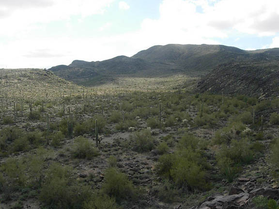 Saguaro cacti,desert shrubs, and trees dot the landscape from the top of the pictograph hill, towards temporal pass.