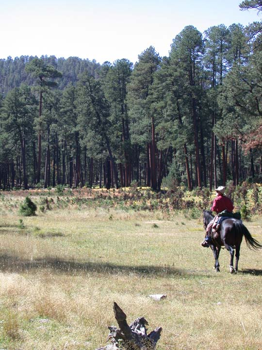A man in a red shirt riding a black horse through a large grassy opening, surrounded by tall forest pines.