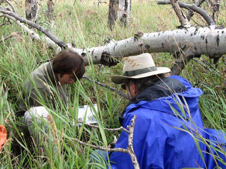 Two members of the University of Montana Wilderness Institute's plant monitoring project on the Boone and Crockett Ranch inspect plant life.