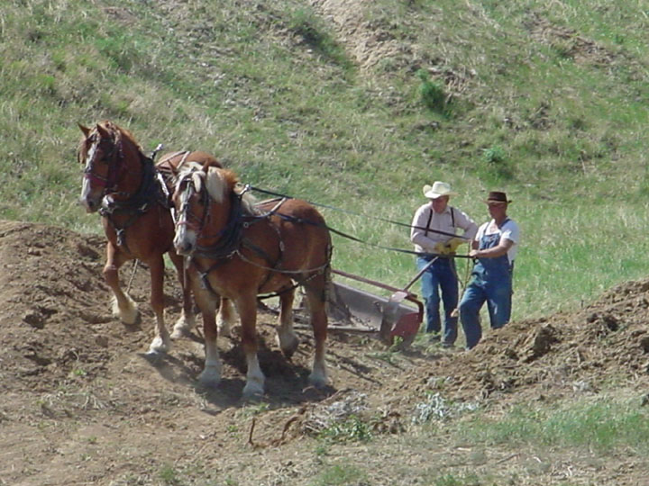 A pair of large draft horses pulling a Fresno scraper up an embankment, under the guidance of two menff.