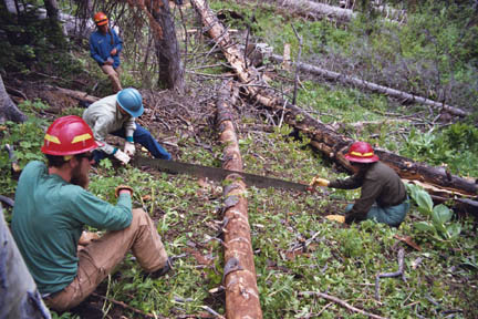 Four agency staff members wearing hard hats, work to cut a felled tree into sections using a hand saw.