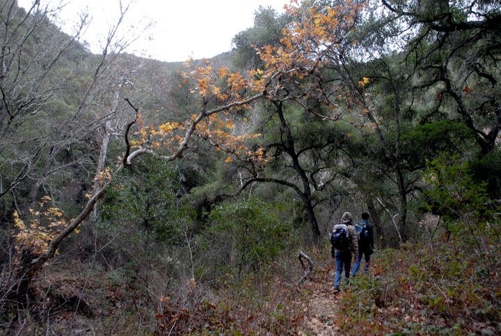 Two hikers traveling a narrow trail through dense forest along the base of a ravine.