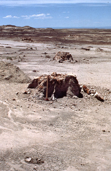 Two rocks mounds indicate the Fossil Forest Research Natural Area.