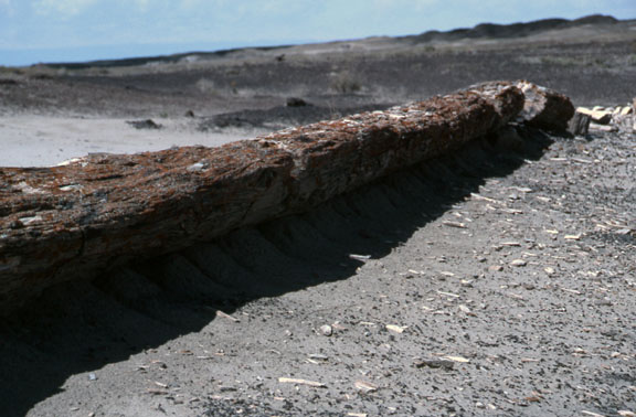 A fossil log sits idle in the Fossil Forest Research Natural Area.