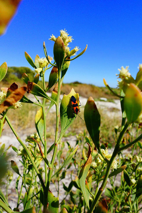 Black and red beetle on plant