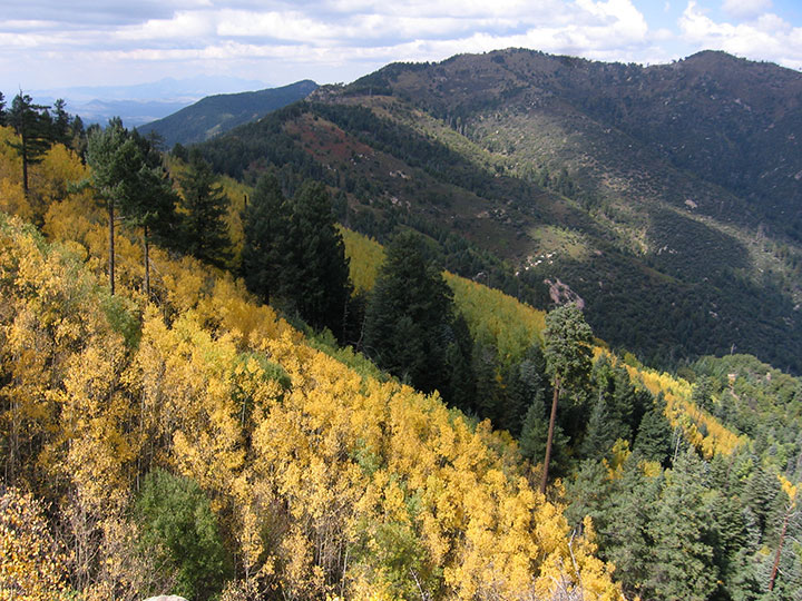 Trees turn yellow in Autumn on a hillside