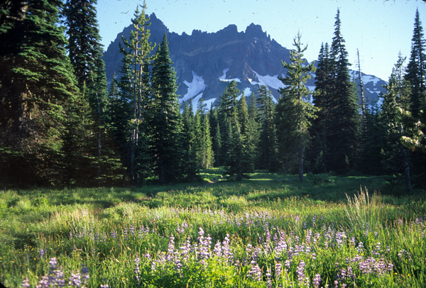 A view from Canyon Meadow where pines separate the meadow form the mountain, Three Finger Jack in Deschutes National Forest in Oregon.
