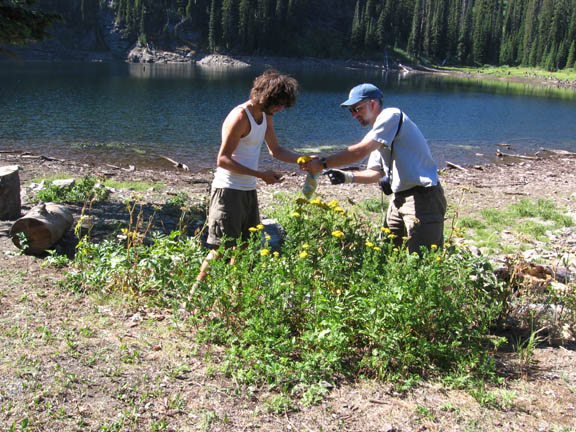 Two volunteers investigate plants and work together near a river in the Rattlesnake Wilderness. Taken during University of Montana summer 2007 volunteer weed inventory study.