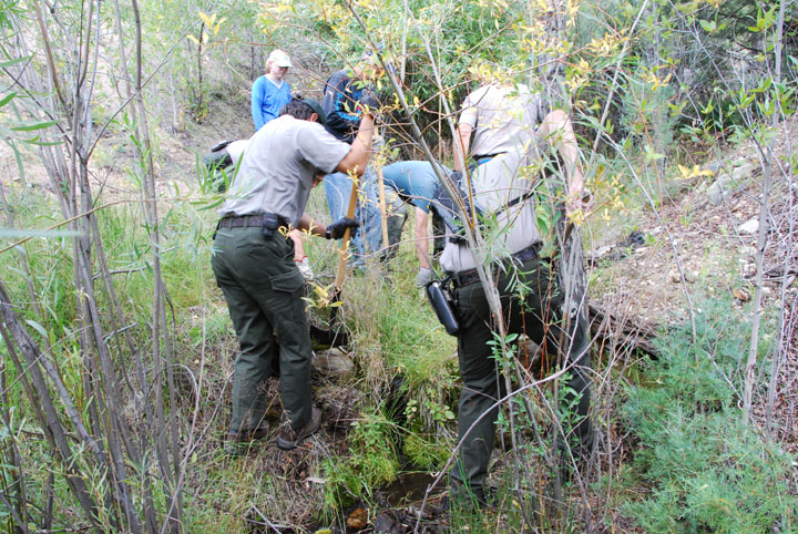Several park rangers use shovels to maintain a small drainage across a trail in the forest.