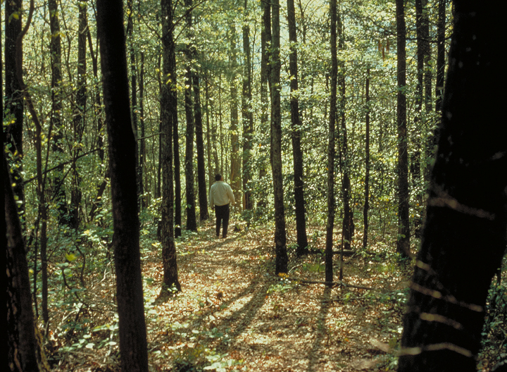 A person explores the forest in the Cohutta Wilderness. The man stands among the tall trees and other foliage as the sun's rays filter through the tree tops.