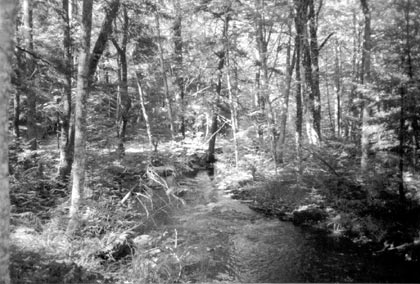 A black and white photograph of a small stream flowing through open forest.