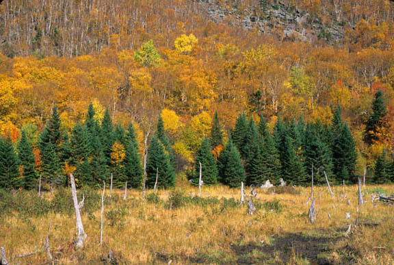 A photo of the swamp below Mount Horrid. Mount Horrid is covered in autumn yellows, oranges, and reds. The swamp below is populated with tall, dry grass and dead tree remains.