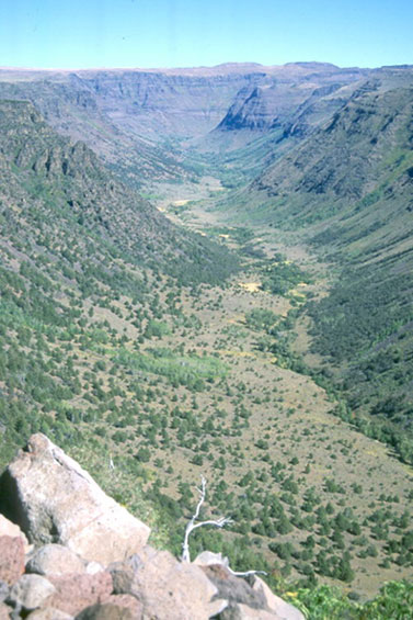 An arial view of the Big Indian Gorge. This ravine is dotted with coniferous trees.