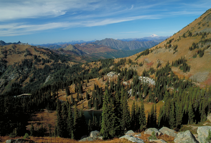 A golden valley can be seen, dominated largely by tall green pines.  A few rocks litter the foreground, and the blue sky overhead makes all the other colors even brighter.