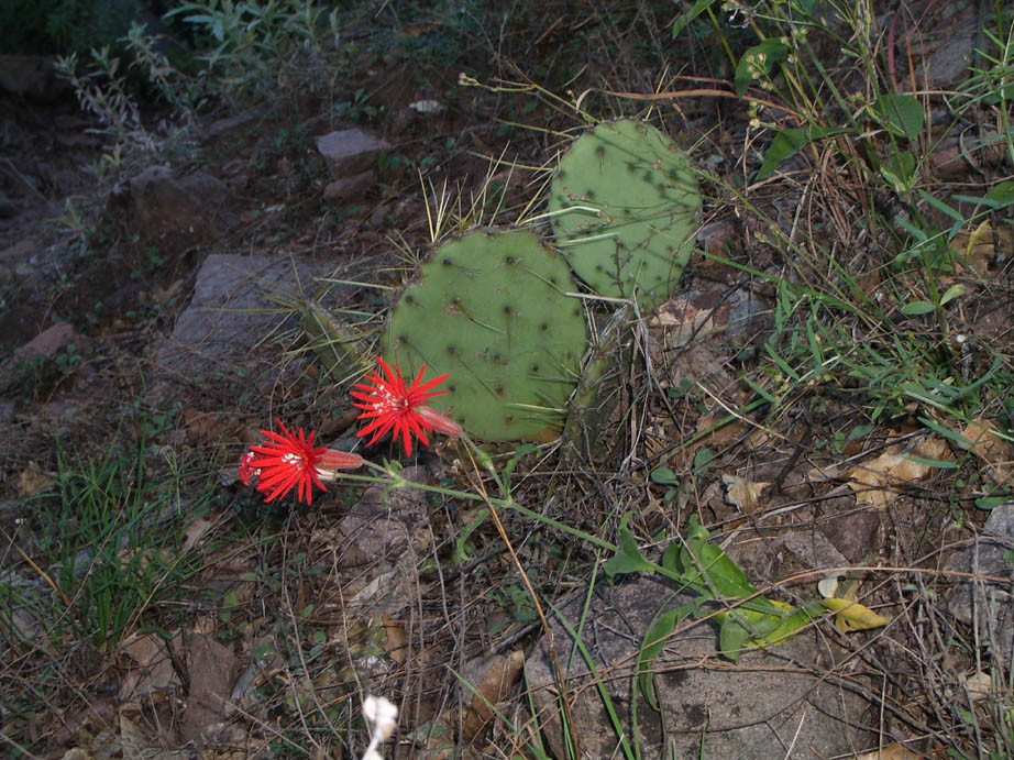 A close-up of the forest floor, a small cactus growing next to a green plant with two bright red flowers.