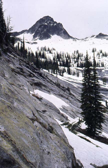 A black and white image of a bare rock slab surrounded by snow and dotted with evergreen trees, stretching away to a rocky knoll above.