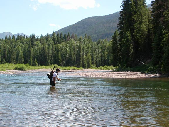 A man fly fishing in the middle of a small river, dense forest rises to low hills in the background.