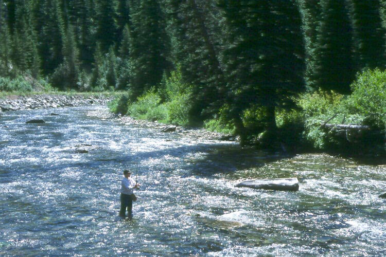 A man standing in the middle of a small river bordered by dense forest, fly fishing.