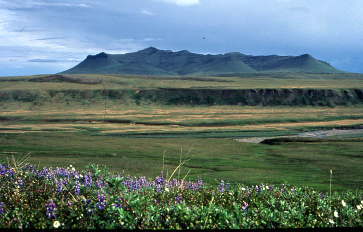 A peaceful landscape, looking out over purple wildflower in the foreground, to an open green valley and low mountains in the distance.