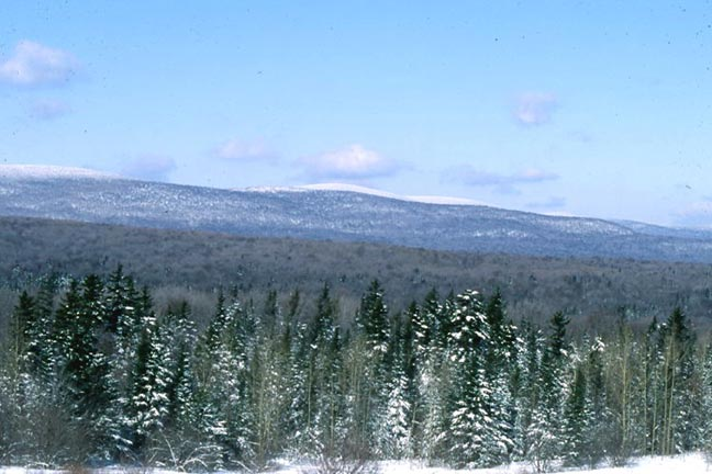 A winter scene looking over large evergreen trees in the foreground, to high woodland, and snowcovered forest higher up the hillside.