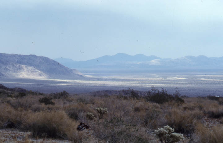 Looking out over a desert landscape, small cactus and brown shrubs in the foreground reaching away to a massive valley in the distance, surrounded by low mountains.