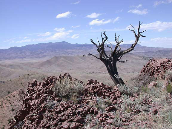 A lone dead tree stands amid red rocks and desert scrub on the summit of Chupadera Mountain.