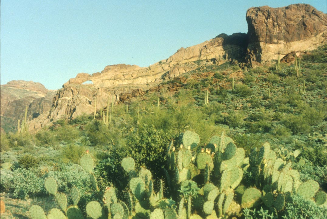 A large clump of green cactus in the foreground, leading up a green slope beyond, to a high wall of rock above.